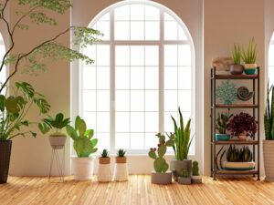 How to Choose Staging Houseplants that Require Little Light